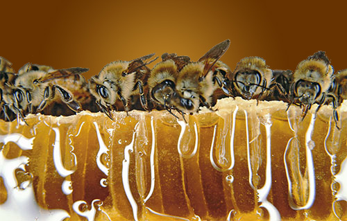 McDaniel Honey Farm banner with honey bees eating